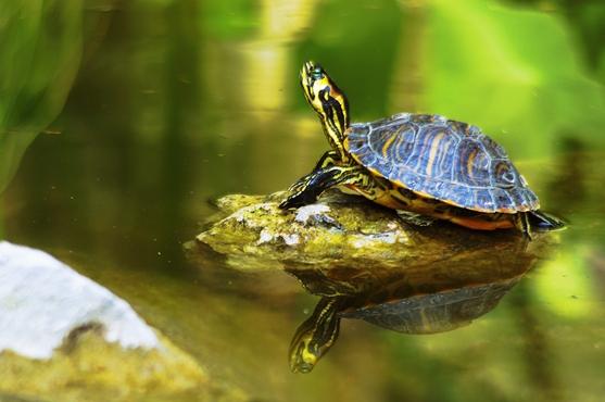 Giardini hanbury c era una volta una giungla misteriosa for Stagno per tartarughe