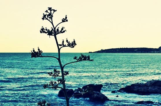 iliguria_spiaggia_uova_011
