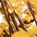 Alba – l'oro delle langhe