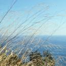 Liguria – Le colline sono in fiore e i cani ridono